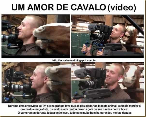 amor_cavalo