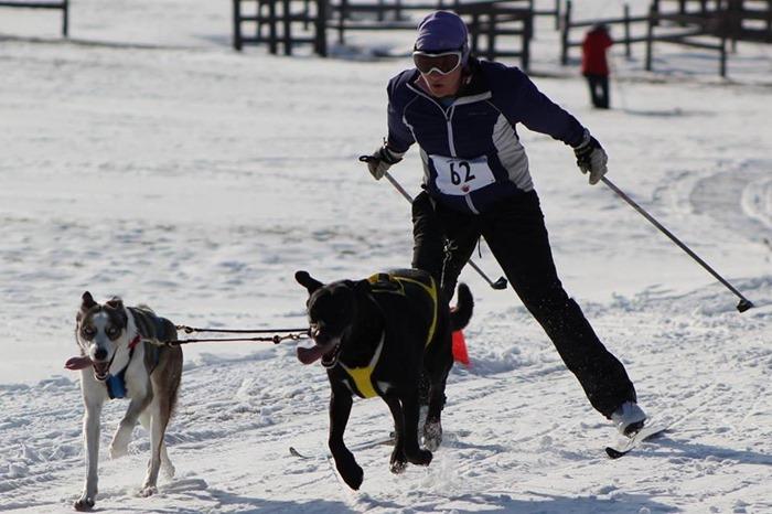 Karma skijoring