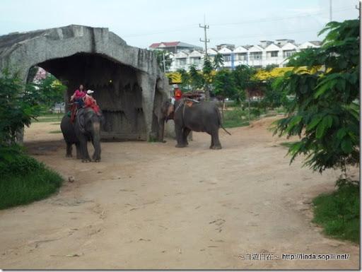 泰國芭達雅-騎大象4