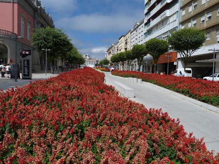 9. flori in Braga.JPG