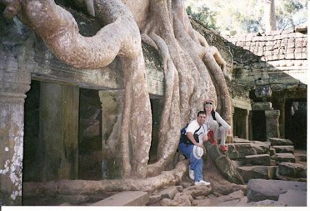 Angkor Wat: The trees of Angkor