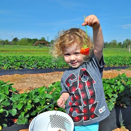 Strawberry Picking with Kara's Classroom