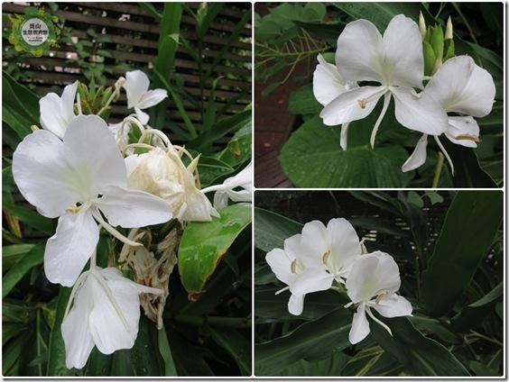 小白花的季節