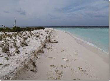 馬爾地夫 野餐島 浮潛 (46)