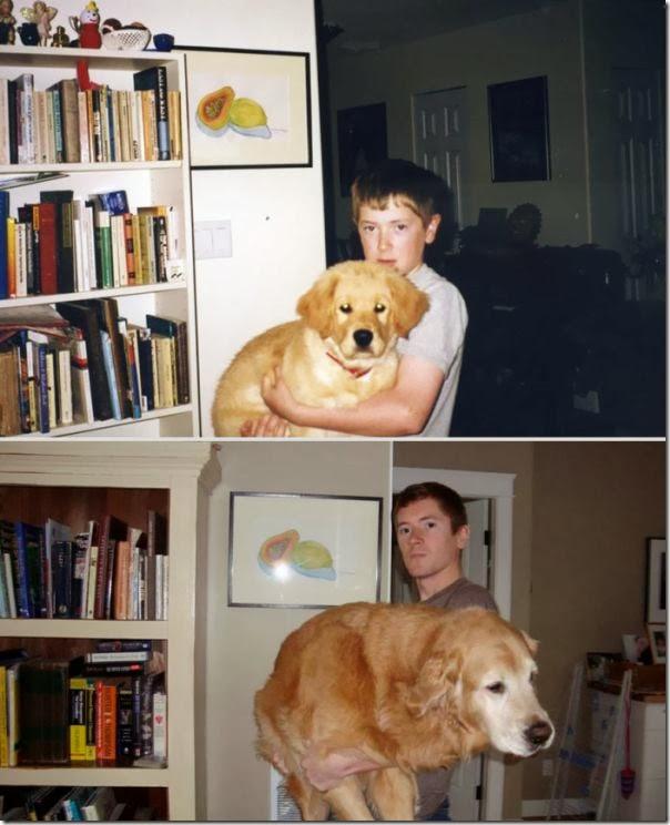 Antes e Depois de Animais de Estimação (14)