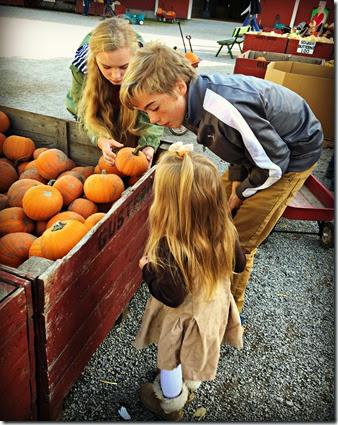 pumpkinselection