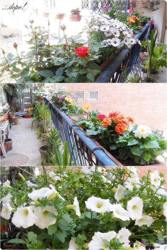 soffiodidea-piante-4