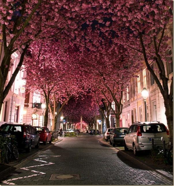 112012_CherryBlossoms-e1353451534822