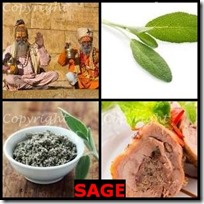 SAGE- 4 Pics 1 Word Answers 3 Letters