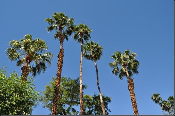 04-20-12 Palm Springs 10