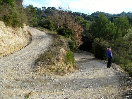 A woodsy walk 13