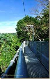 Tree Top Walk 2