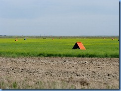 1967 Alberta Hwy 879 North - orange tents are shelters for the bees which pollinate the canola