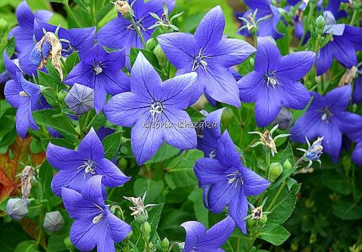 Azul - Glória Ishizaka 12