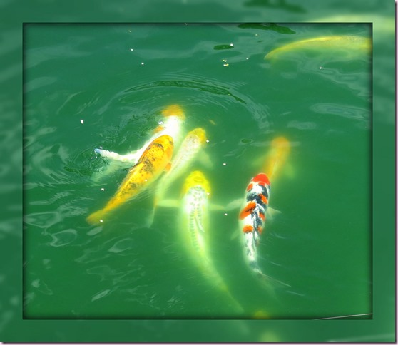 FishMirrorIMG_2626