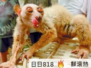 神秘怪猴(外星恐怖生物?神秘怪猴)