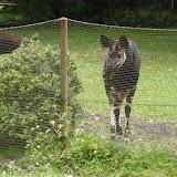 Zootour Teil 2