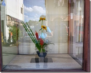 【自由花】ヒマワリ、ケイトウ、オクロレウカ