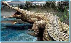 _1647294_crocodile300