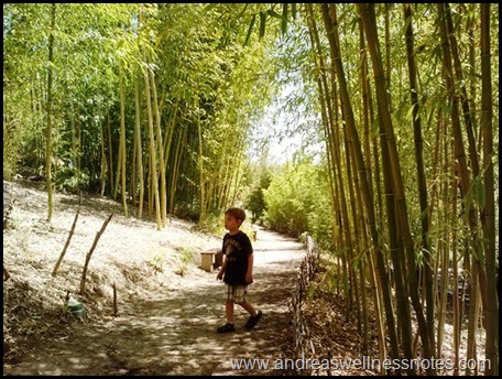 Bamboo Forest 02