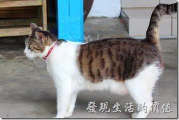 平溪線一日遊-侯硐貓村