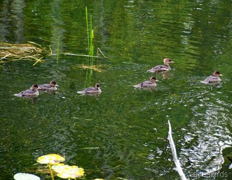 2a. six ducks-kab2