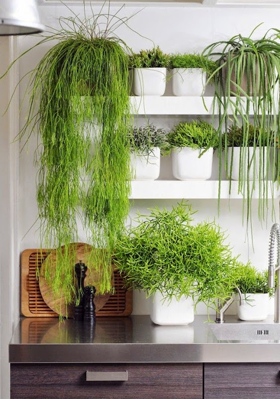 Plants_in_the_kitchen