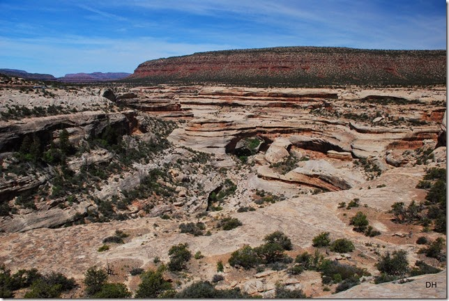 05-17-14 B Natural Bridges NM (21)