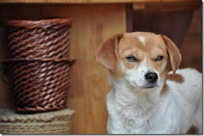 fotos gradiosas de perros capitanpalomo (10)