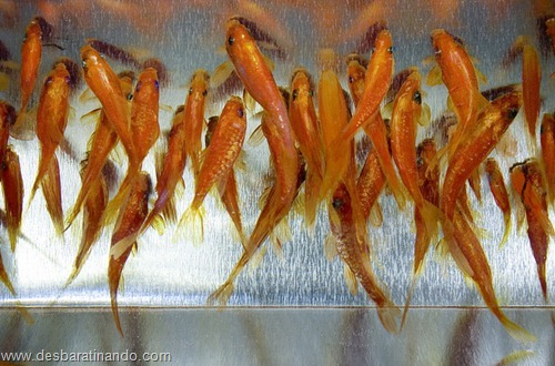 peixes pintados em 3d desbaratinando (26)