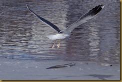 - D7K_2505 January 20, 2012 NIKON D7000