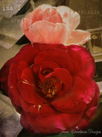 Roses_Susan