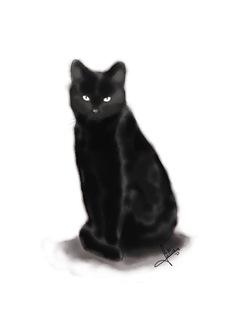 gato_cbarros