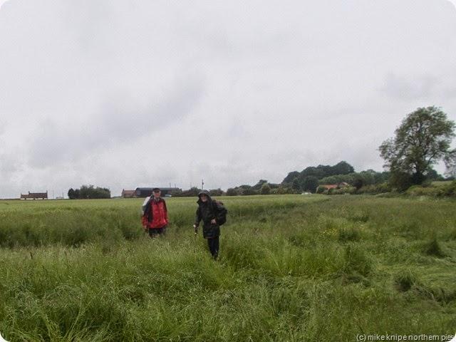 barley field (wet!)