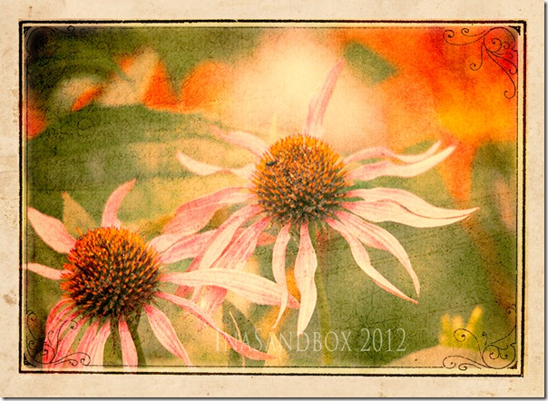 Giant Coneflowers with Topax Adj and Textures and CS Frame