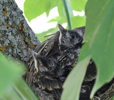 20140701_120803-robin-nest