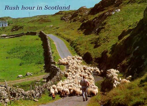 Час пик в Шотландии