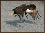 Eagle & Chicken by Bayside RV
