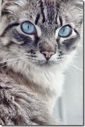 Fotos de gato buscoimagenes (39)
