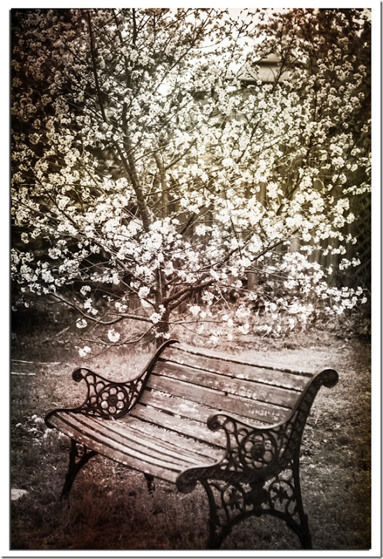 Bench by Cherry Tree BW with textures