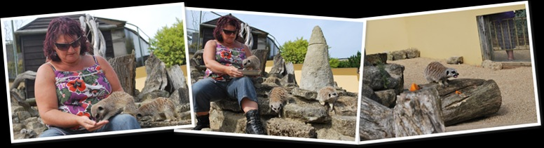View Marion Meerkat Encounter 09.09.12