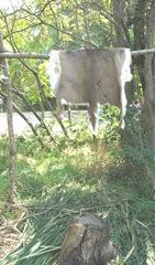 Plimoth Plant deer hide on rack