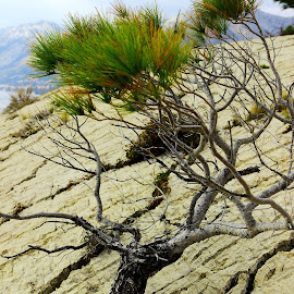 by Nikola Ursic - Nature Up Close Trees & Bushes