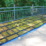 Mountain Moss-NC Arboretum Green Roof-10-Web.JPG