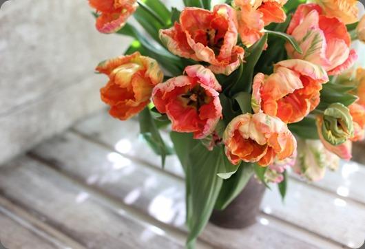 tulips IMG_5657-700x466