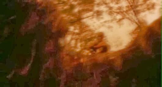 Última vez que trato de atajar por el bosque cuando voy mamado. Lo juro.