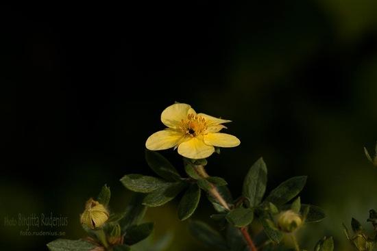 blom_20111014_insekt1