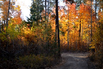 fall color_66