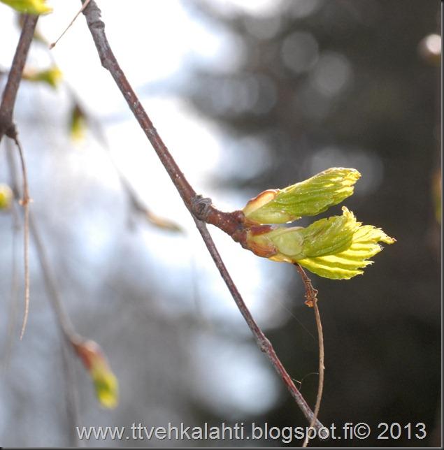 makro kukkia 029