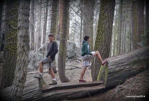 Lumberjacks?